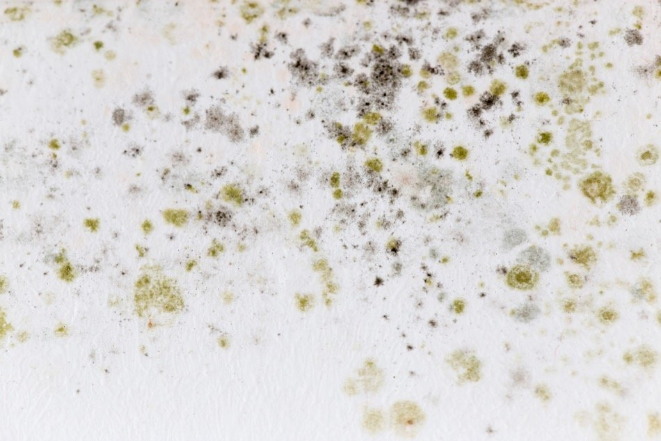 Your Guide to Mold Removal