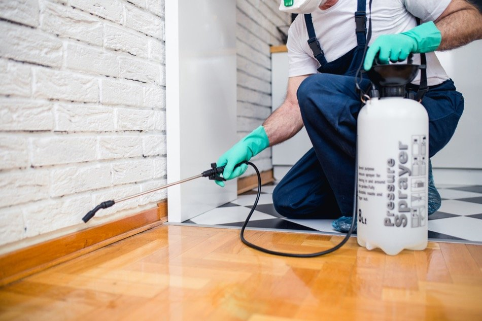 A Guide to DIY Home Pest Remediation